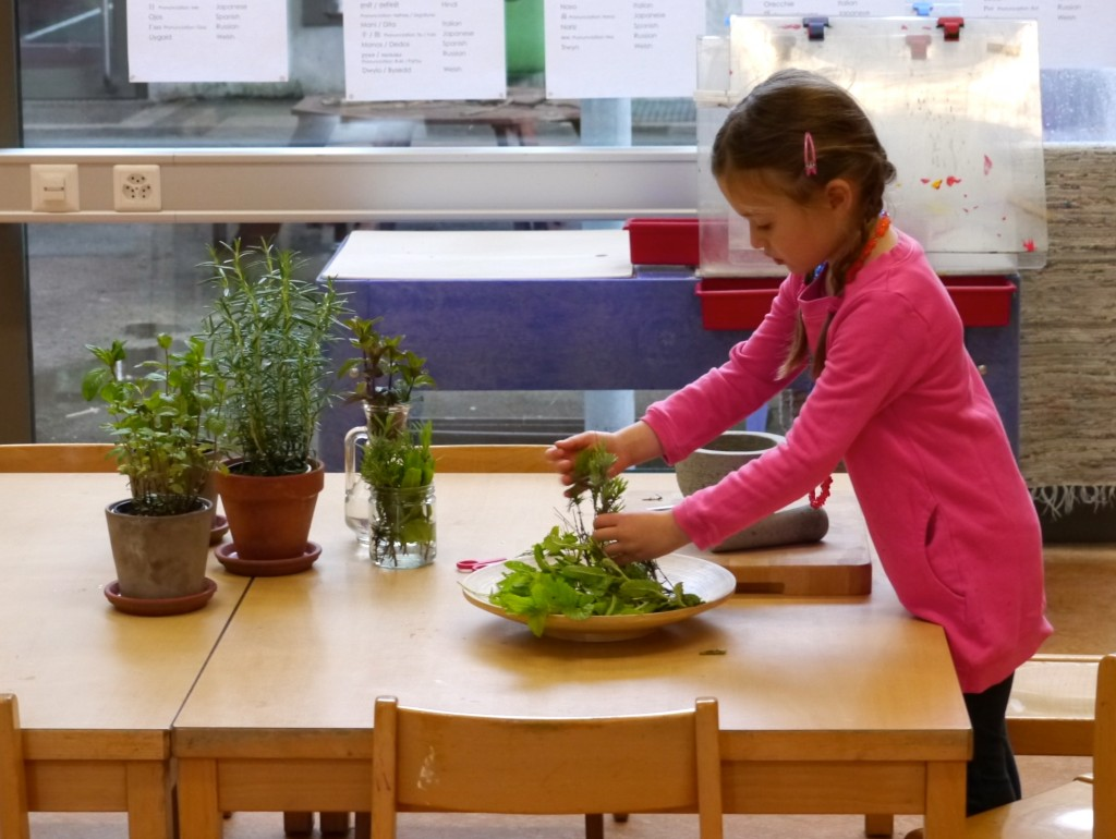 Selecting fresh herbs to use in the mortar and pestle