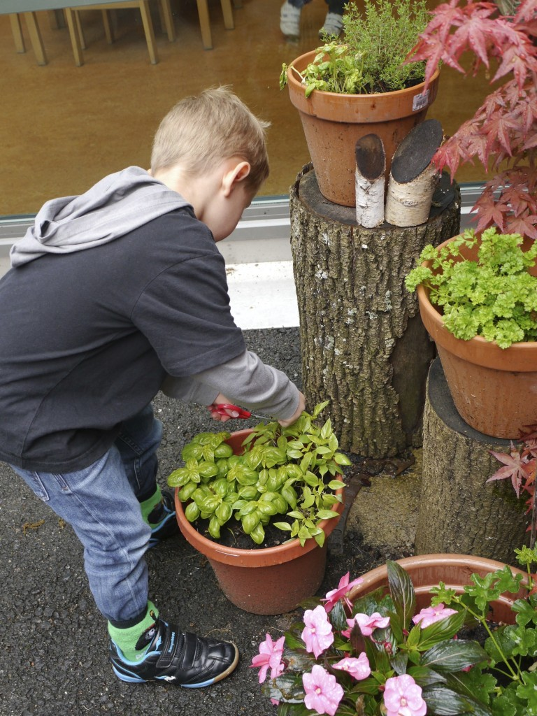 Gathering herbs from our Sensory Garden in the courtyard to use for our smelling activity